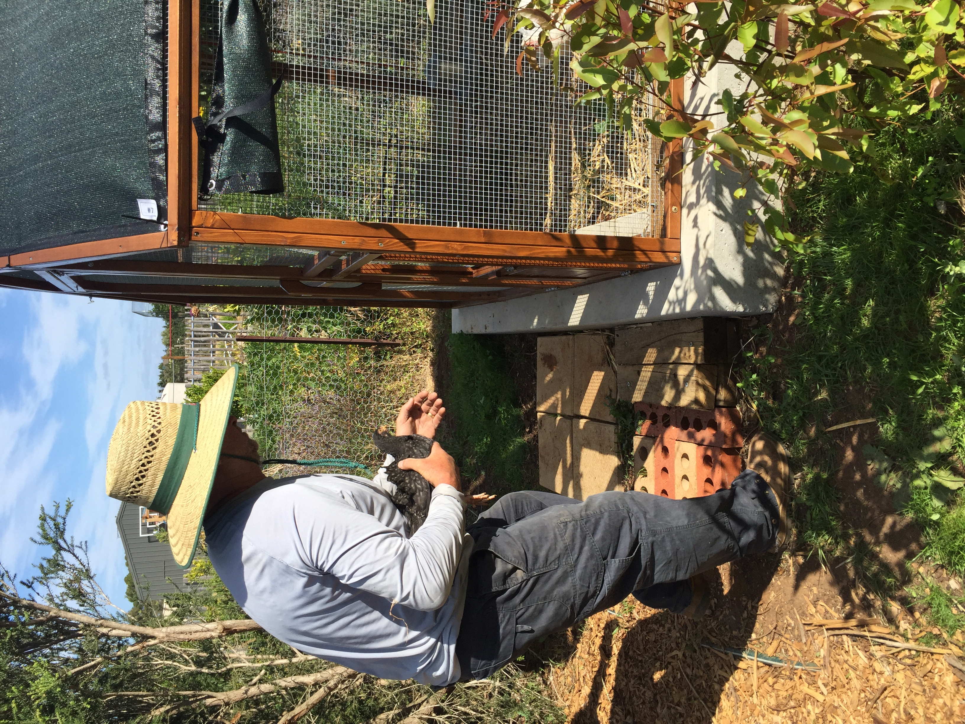 Chooks – Scots grey hen and coop
