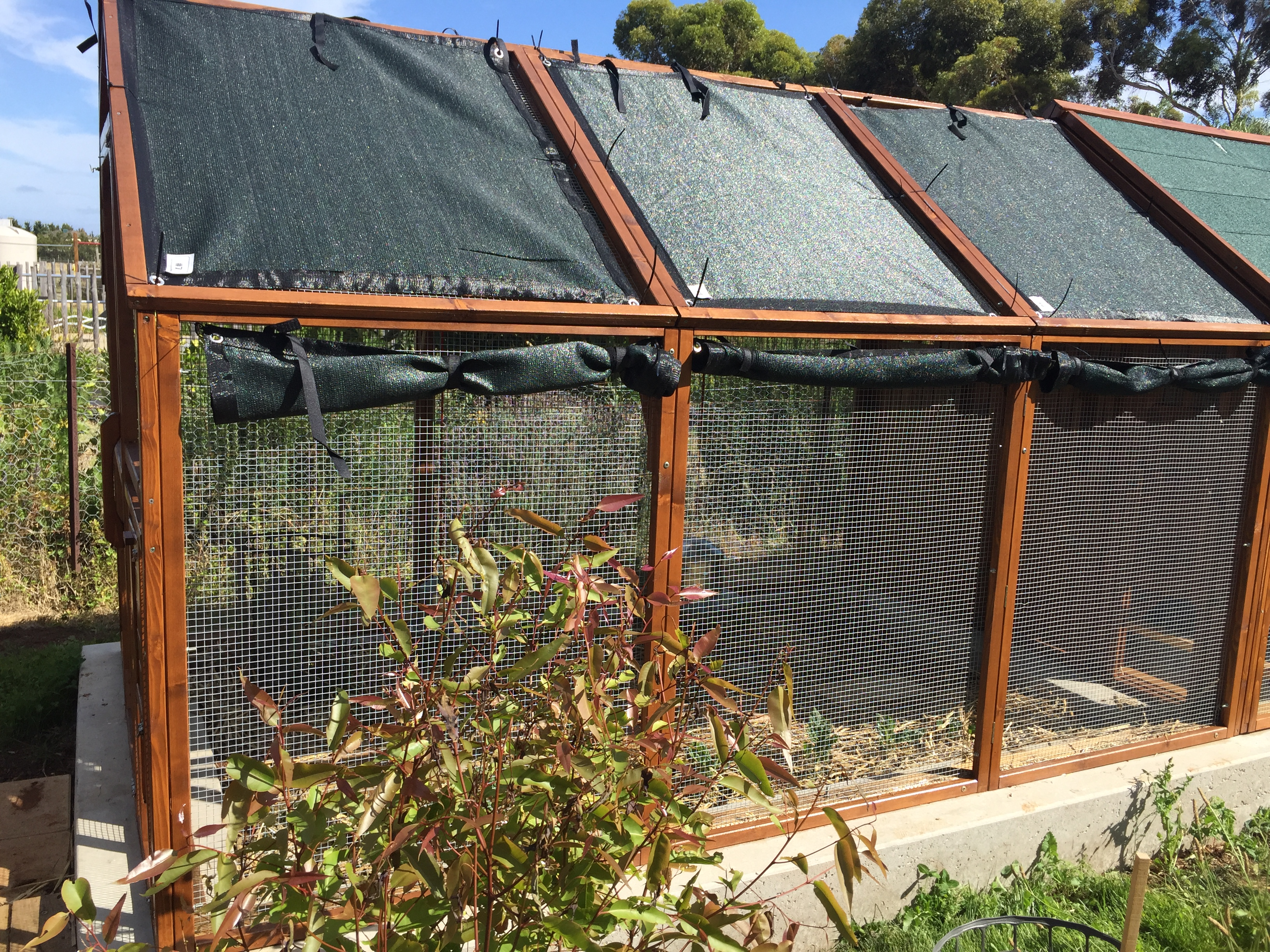 Chooks – coop ready for heat