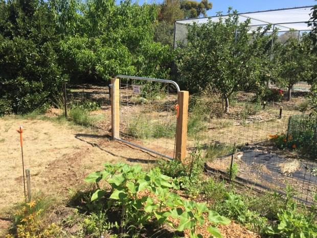 Free - shed gate