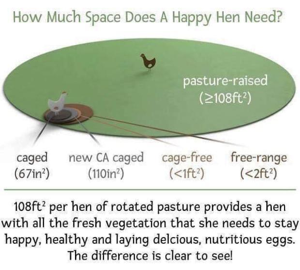 FR - happy hen