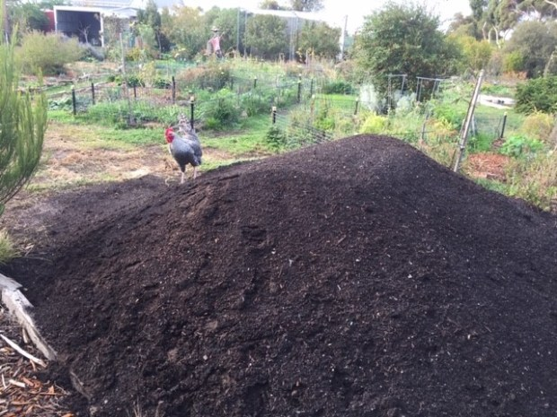 Compost - new at Dreamland