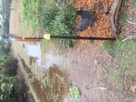 Rain – access way flood