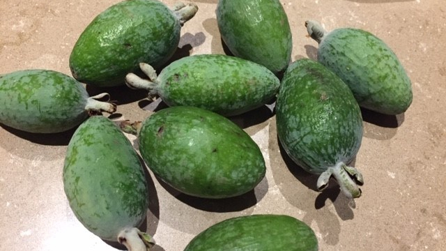feijoa – fruit