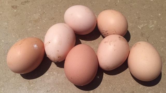Eggs – seven