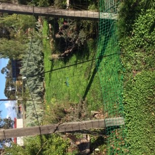 Clover - secret garden
