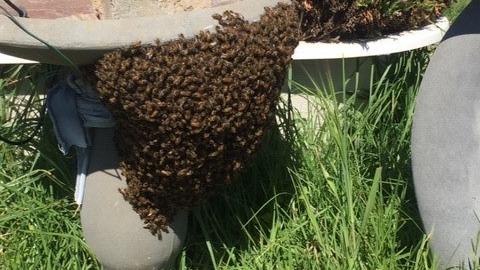 Bees – swarm 1