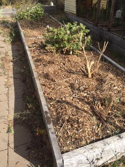 bedx – dry herbs – Copy