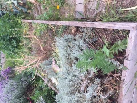 bedx – overgrown herbs