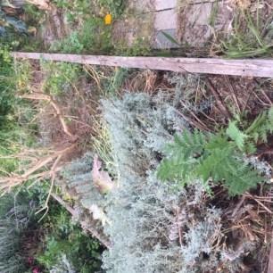bedx - overgrown herbs