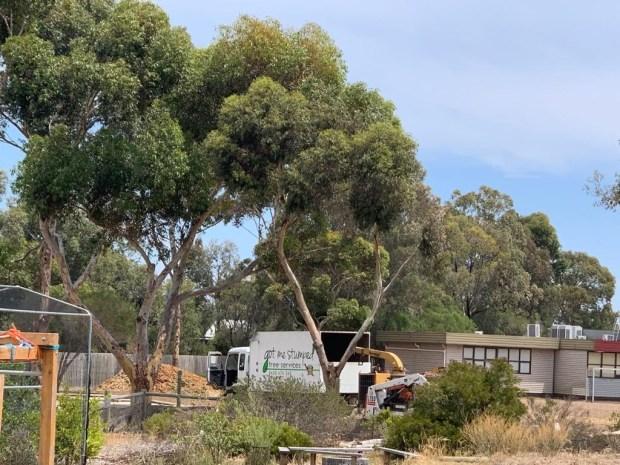 Tree - at work