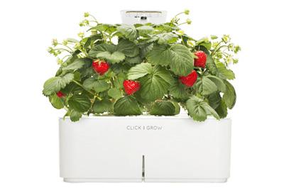 Click & Grow Smart flowerbed Cockscomb Indoor Grow Kit