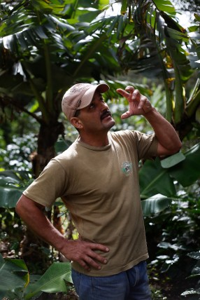 Oldemar Salazar Picado describes the different plants that he grows on his organic coffee farm, Finca La Bella. Salazar has many different plants that provide backup produce if there is a problem with his coffee, as well as providing wind-breaks, shade and other benefits. Photo by Nadav Soroker.