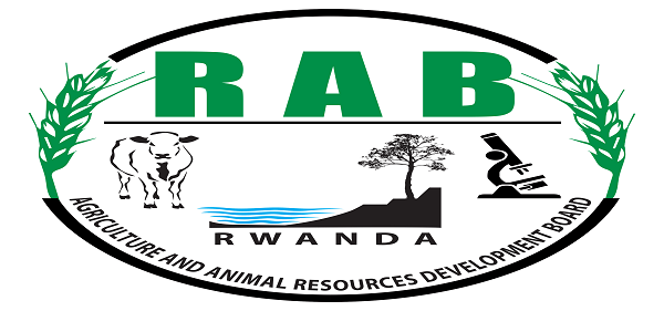 28 Positions at RWANDA AGRICULTURE AND ANIMAL RESOURCES DEVELOPEMENT BOARD (RAB): (Deadline 10 September 2021)