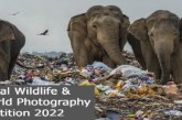 EO Global Wildlife & Natural World Photography Competition 2022: (Deadline 4 April 2022)