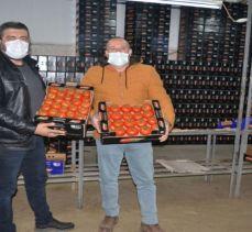 Fethiyeli üreticilerin domates sevinci