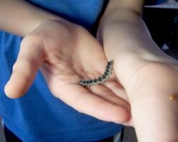 caterpillar 1 week