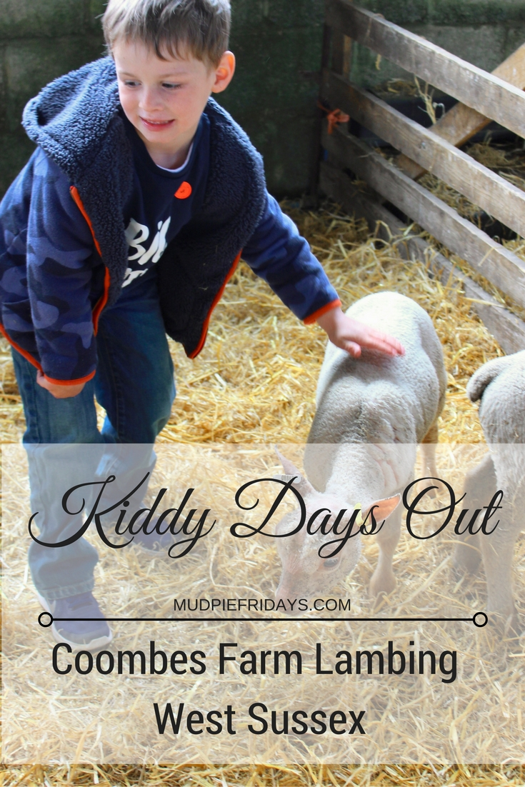 Coombes Farm Lambing