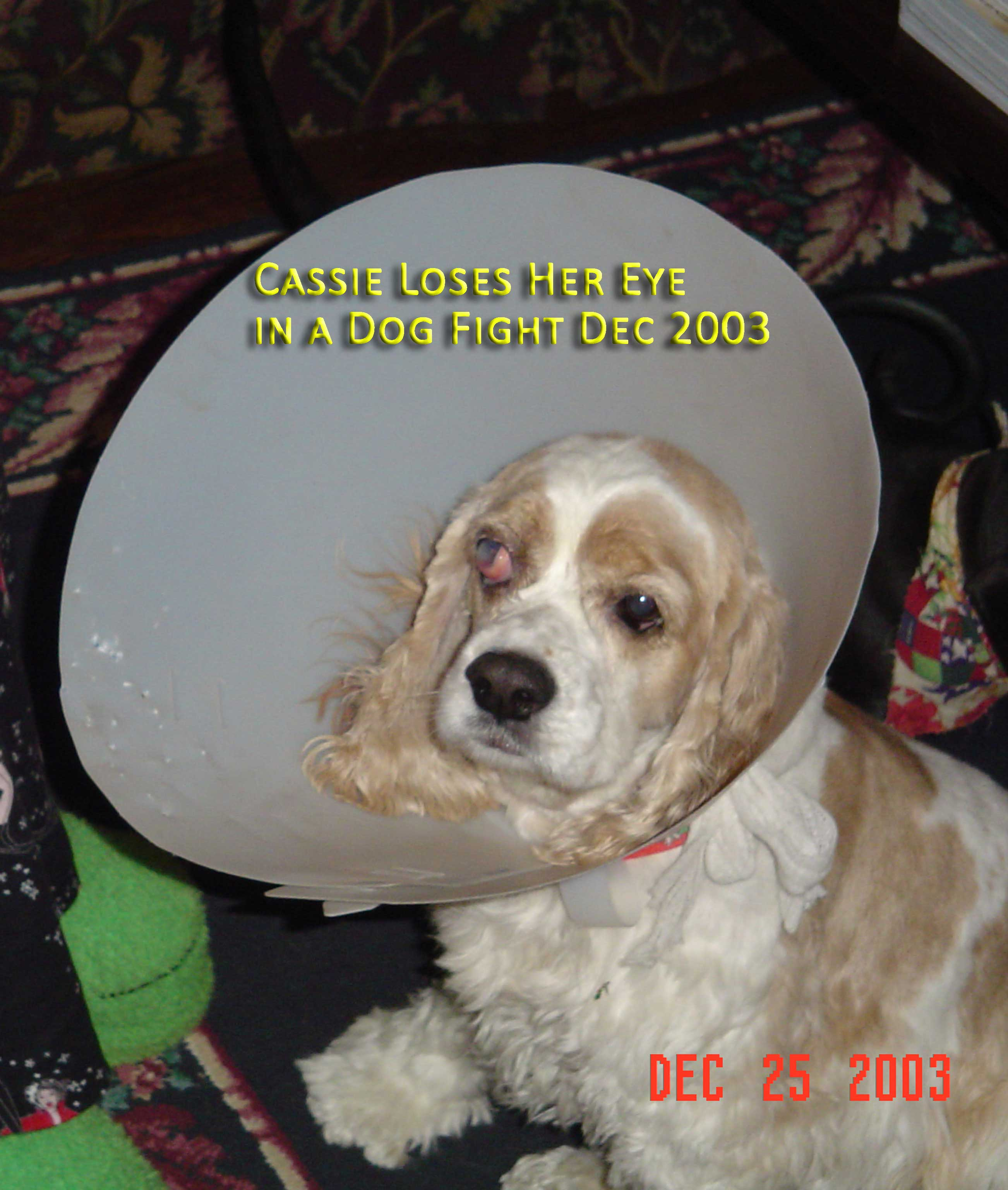 Cassie loses an eye