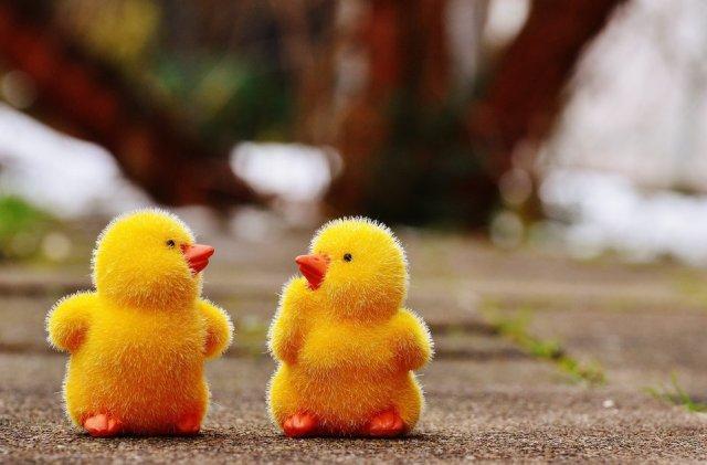 Writing for Ducks_Image