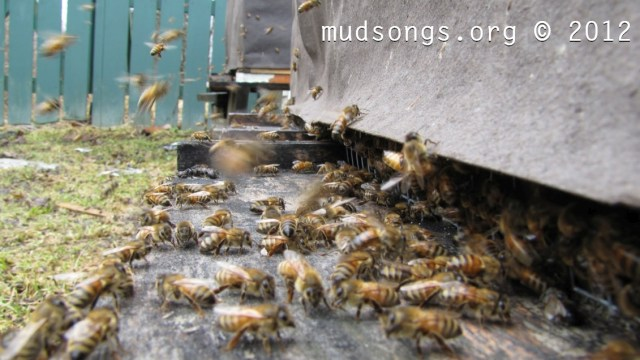 Spring wake up call for Hive #3 (April 8, 2012.)