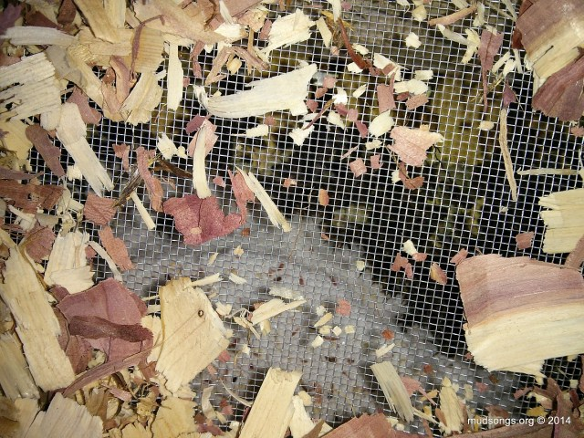 Clearing away the wood chips allows me to see what the bees are doing. (February 1, 2014.)