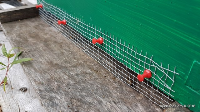 Shrew-proofing mesh attached quietly with easy-to-remove thumb tacks. (Oct. 08/16.)