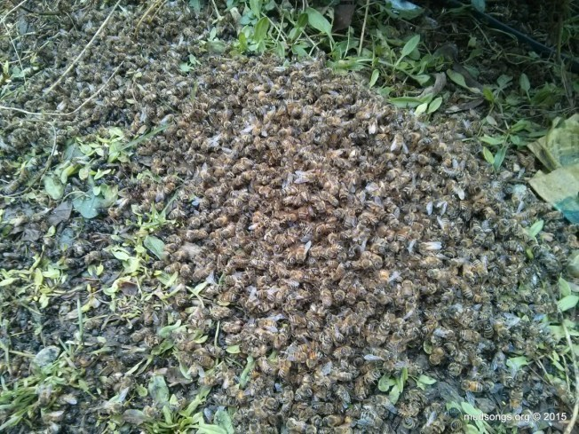My guess is  about two thousand dead bees?