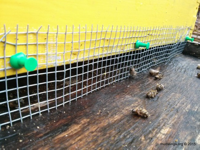 Three green thumb pushpins (instead of staples) used to attach mesh over bottom entrance. (Dec. 13, 2015.)