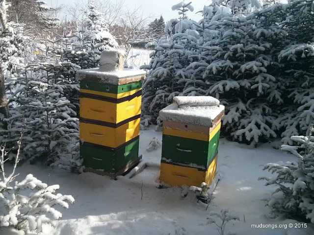 A pair of patented Mud Songs beehives. (January 11, 2015 in Logy Bay, NL.)