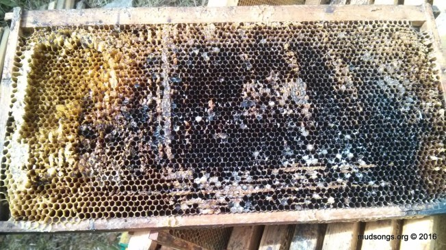 An ugly looking extracted frame I added to the hive for the bees to clean up. (June 06, 2016.)