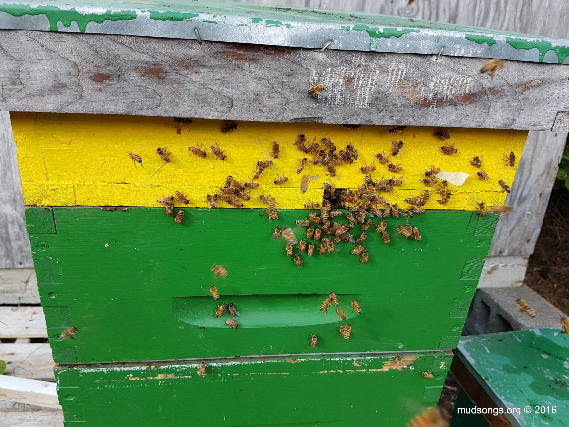 Bees Using The Top Entrance. And..