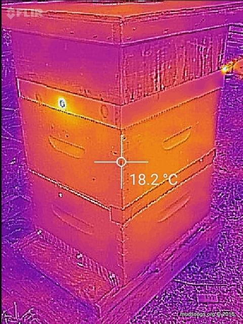 My best guess: for this 2-deep hive with a hive top feeder:  the cluser is in the top box. (Oct. 22, 2016.)