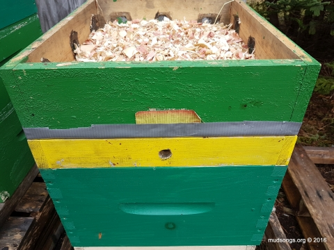 The inner cover removed, replaced with just the rim with a drilled-hole entrance that will be covered with mesh soon and a moisture quilt holding a thick layer of wood chips.  Would a hard piece of insulation hold more heat than a moisture quilt?  Probably.  Would it keep the hive bone dry like a moisture quilt?  Nope. (Oct. 28, 2016.)