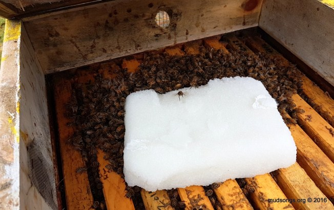 About 700 grams (or 1.5 pounds) of a sugar cake added to this hive today. (Nov. 30, 2016.)