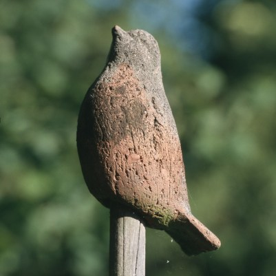 Tonvogel