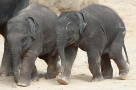 Elefantenkinder unterwegs