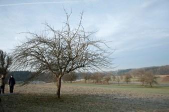 baumschnittkurs_nordschwaben_20140201-DSC_3534