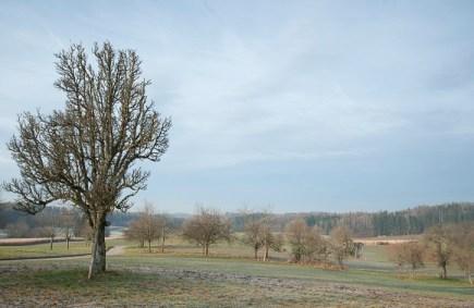 baumschnittkurs_nordschwaben_20140201-DSC_3538
