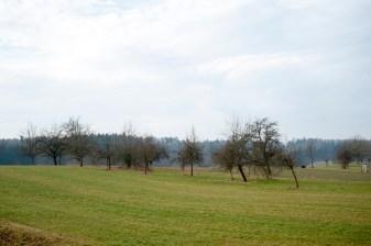 baumschnittkurs_nordschwaben_20140201-DSC_3565