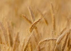 Weizenprodukte