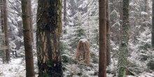 Judith Egger: Wildnis, Wald und wir