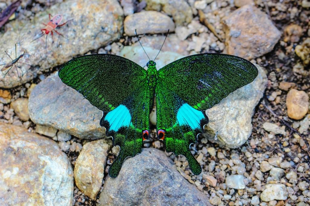 Ein grün schimmernder Schmetterlung mit türkis farbenen Tupfen als Synonym für den ersten Blogpost.