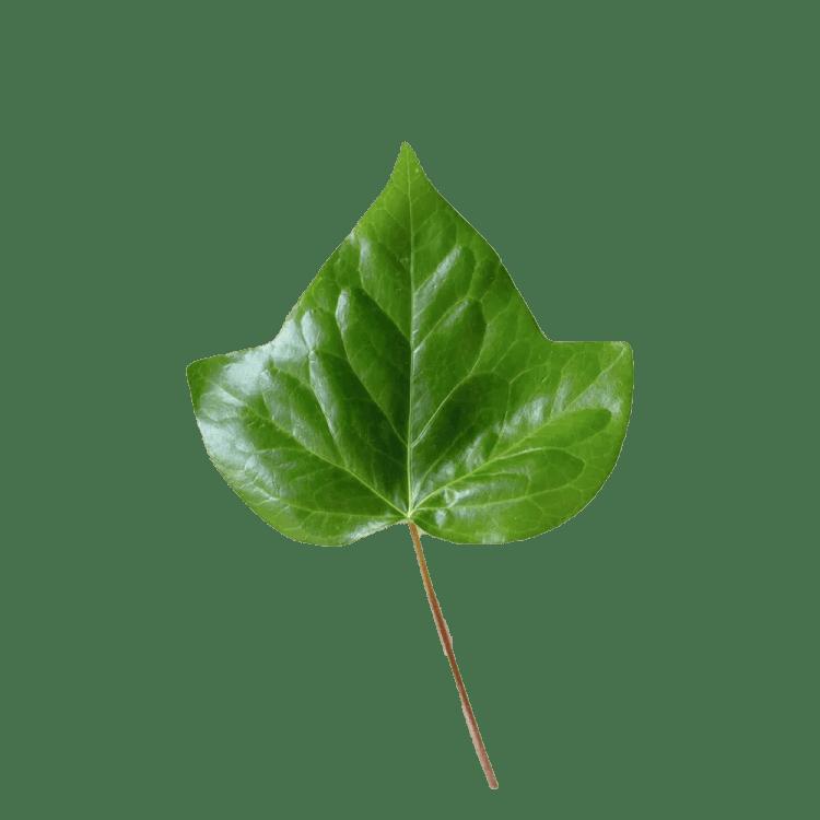 sustainability at mueslihaus