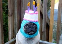 pug-in-birthday-hat