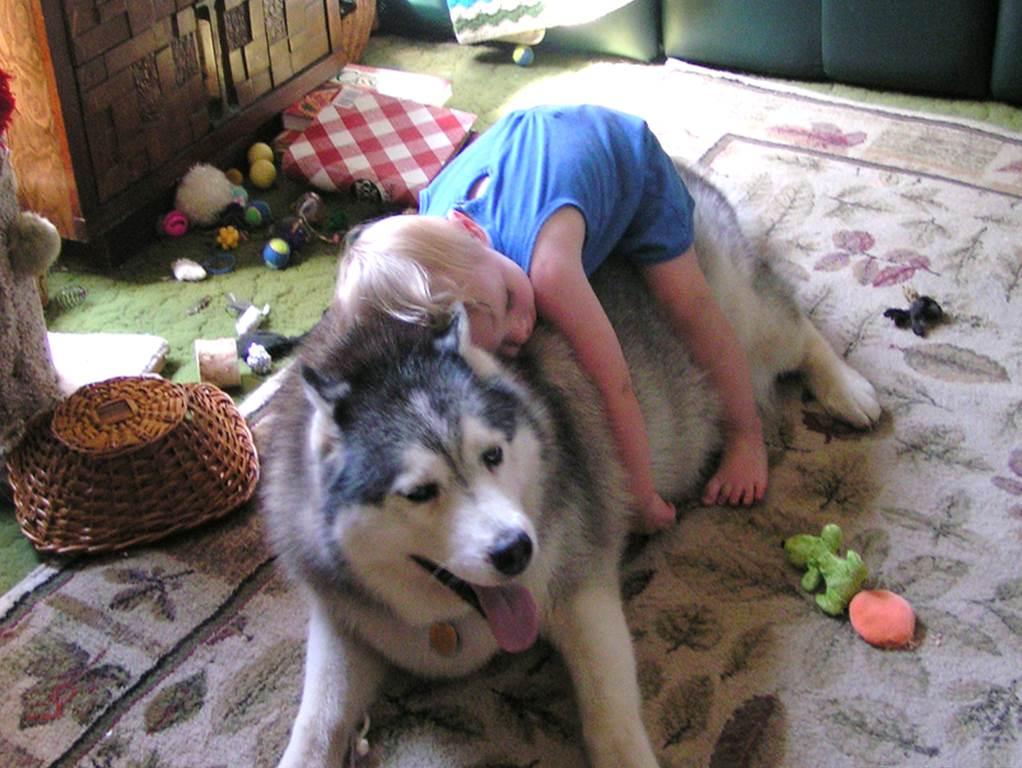 اضرار تربية الحيوانات الاليفة في المنزل مفهرس