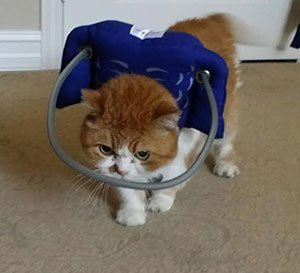 Muffin's Halo for blind cats