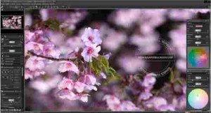 silkypix-developer-studio-pro-full2-300x162-1141347