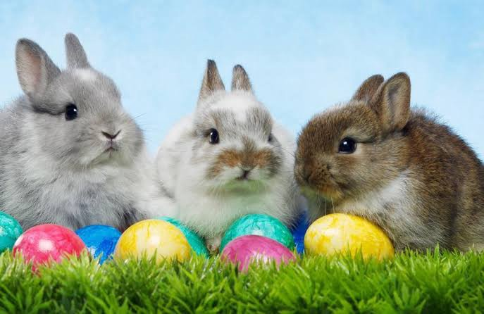 Easter bunnies, Eggs and other Easter traditions demystified. 1 MUGIBSON WRITES