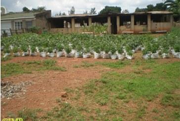 Life on Uganda farm