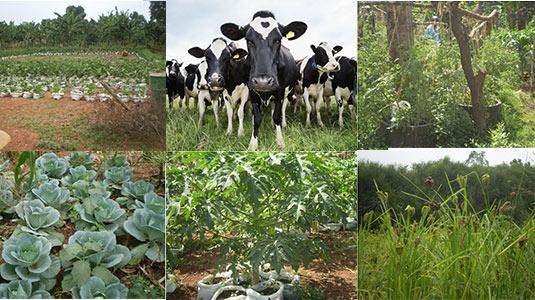 farm-mixed
